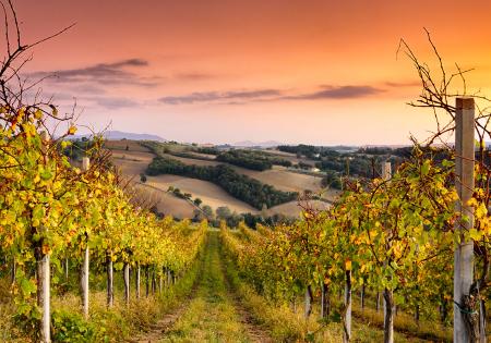 online cursus italiaanse wijn
