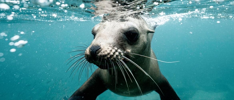 We moeten het leven in de oceaan beschermen