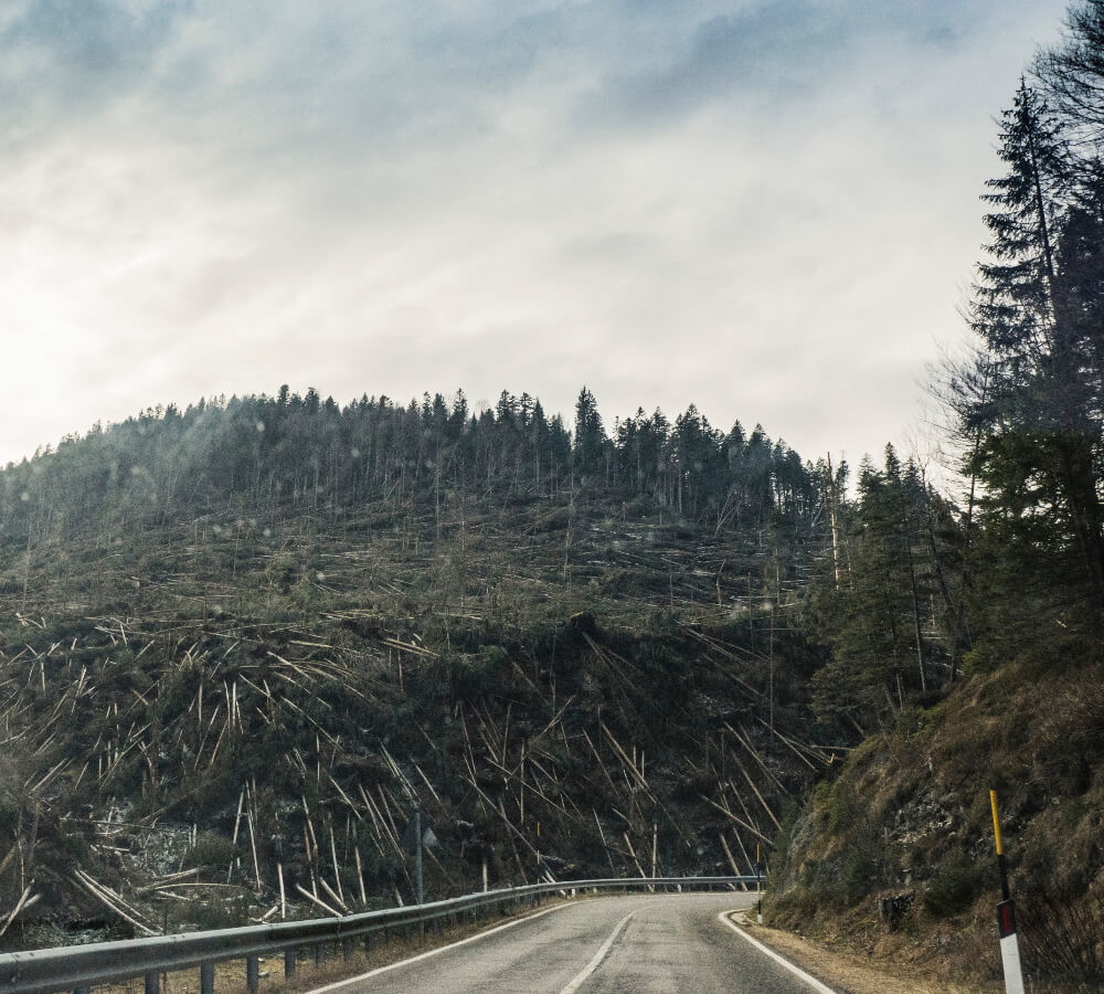 De gevolgen van ontbossingen