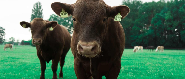 Hoe gezond is het vlees dat wij eten?