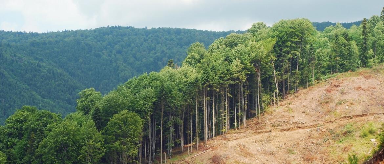 Wat zijn de gevolgen van ontbossingen?