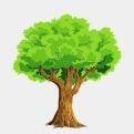 Plant een boom!