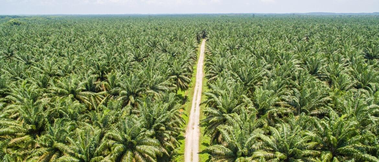 Waarom worden er bomen gekapt in het Amazoneregenwoud?