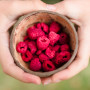 fruit adya groenten bio gezond lekker gemakkelijk fair framboos gevriesdroogd