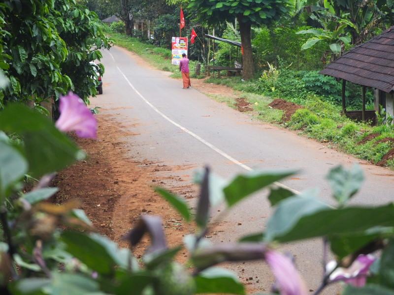 kerala forest green fruits
