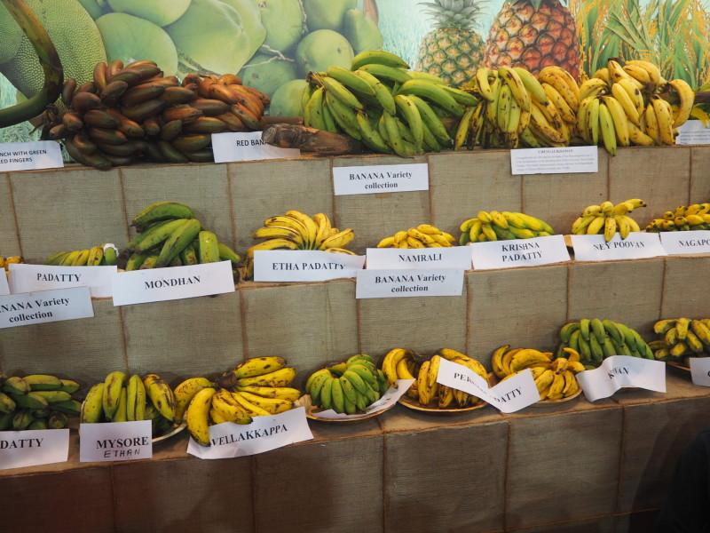 banana variety organic kerala