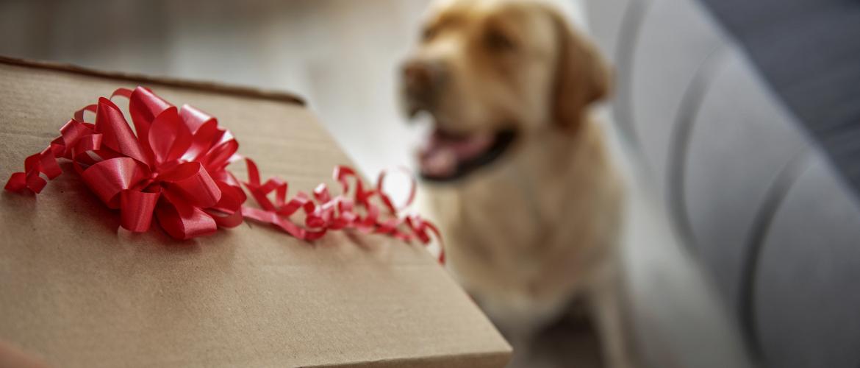 10 cadeautips voor je hond
