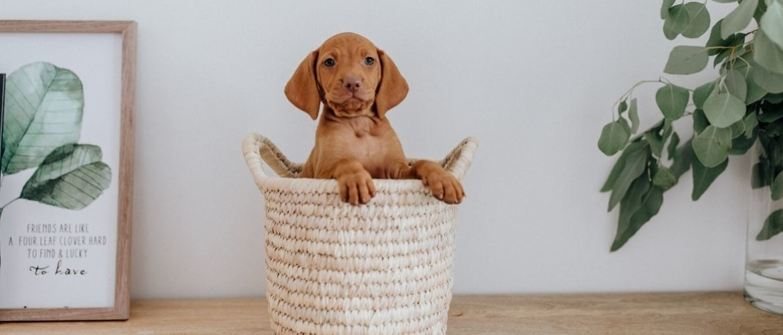 Waar moet je op letten als je een puppy koopt?