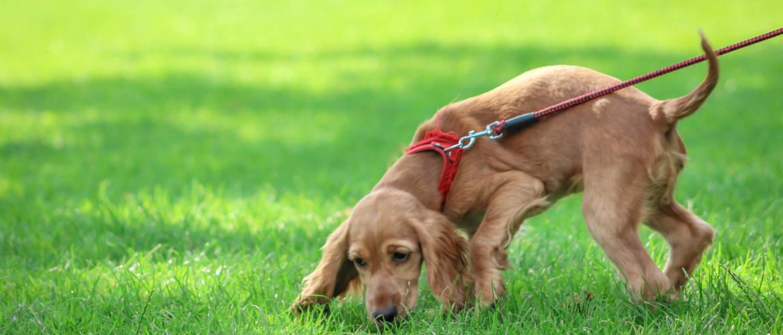 hoevaak een puppy uitlaten?