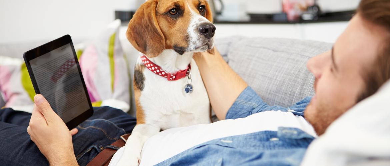 Hoe bereid je de hond voor op alleen thuis zijn?