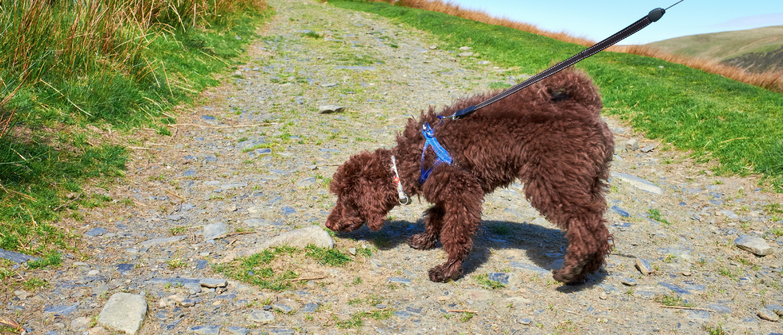 Hond wandelen en snuffelen