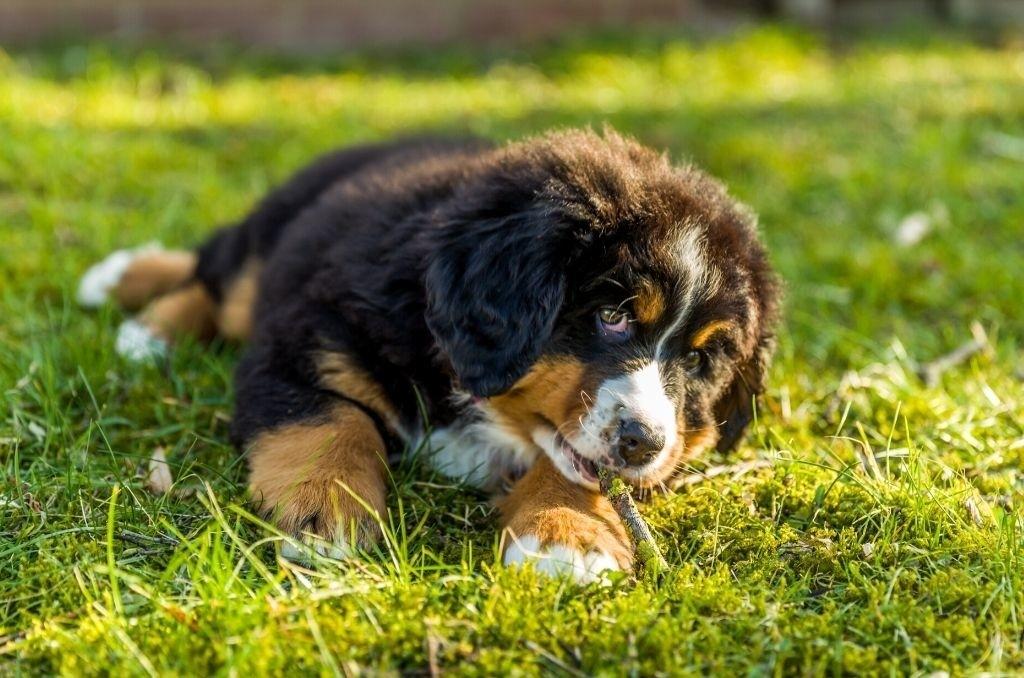 Tips om een pup te kopen