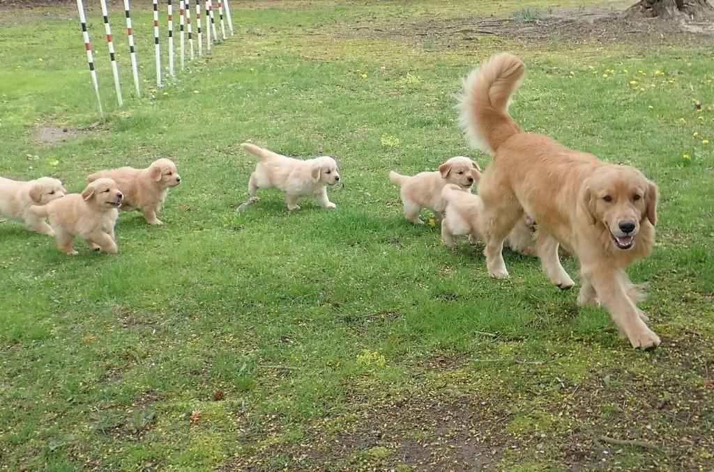 Moederhond aanwezig bij puppy kopen