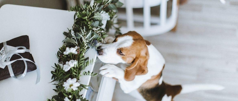 Belang van snuffelen honden