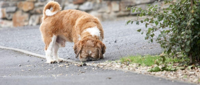 snuffelen voor honden