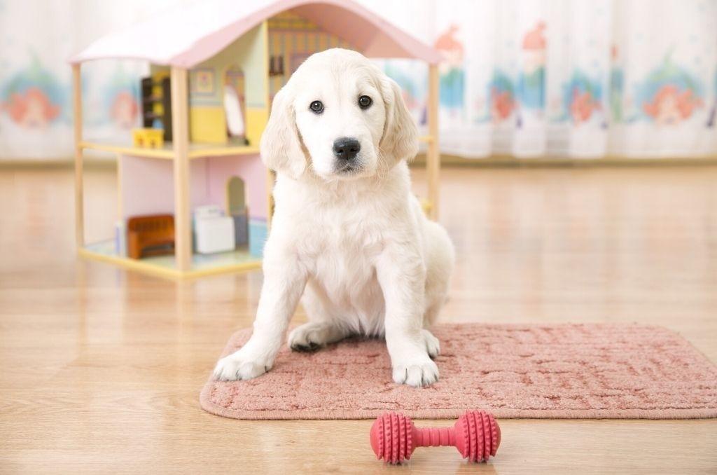 Waar moet je op letten bij aanschaf van een puppy