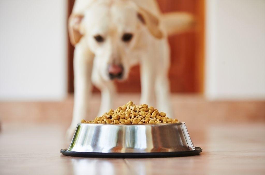 Agressie tijdens eten hond