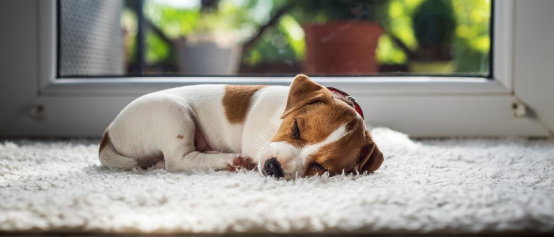 Hoeveel slaapt een hond