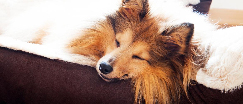 Hoeveel slapen honden