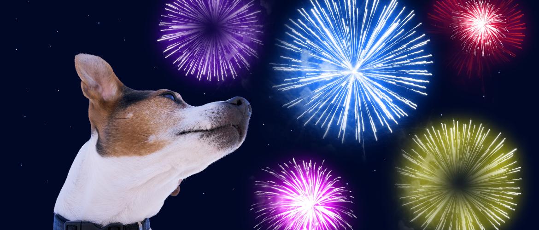 Mijn hond is bang voor vuurwerk