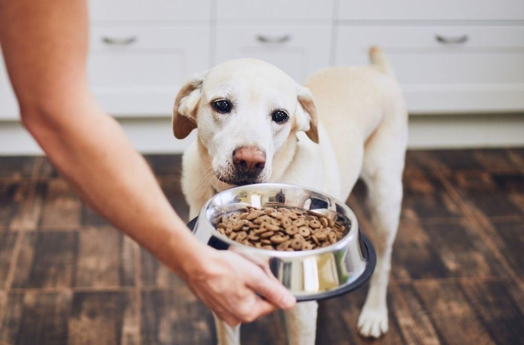 Hond agressief tijdens het eten