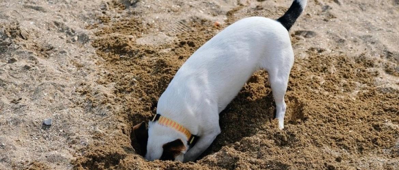 Mijn hond is aan het graven in de tuin