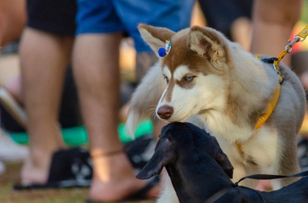 Jaloezie bij honden