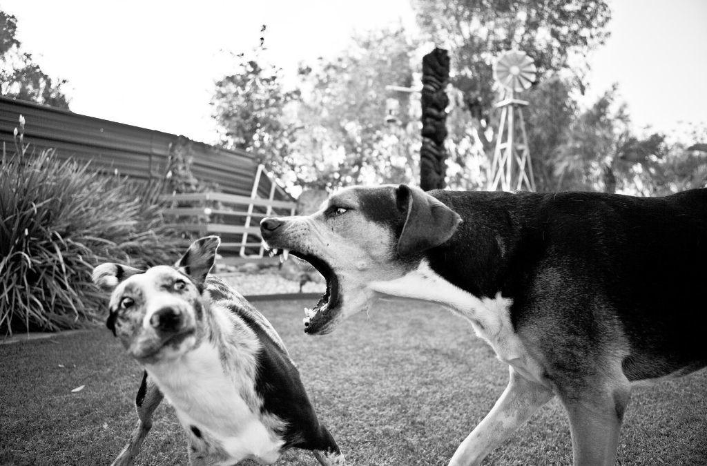 Kan een hond jaloers zijn