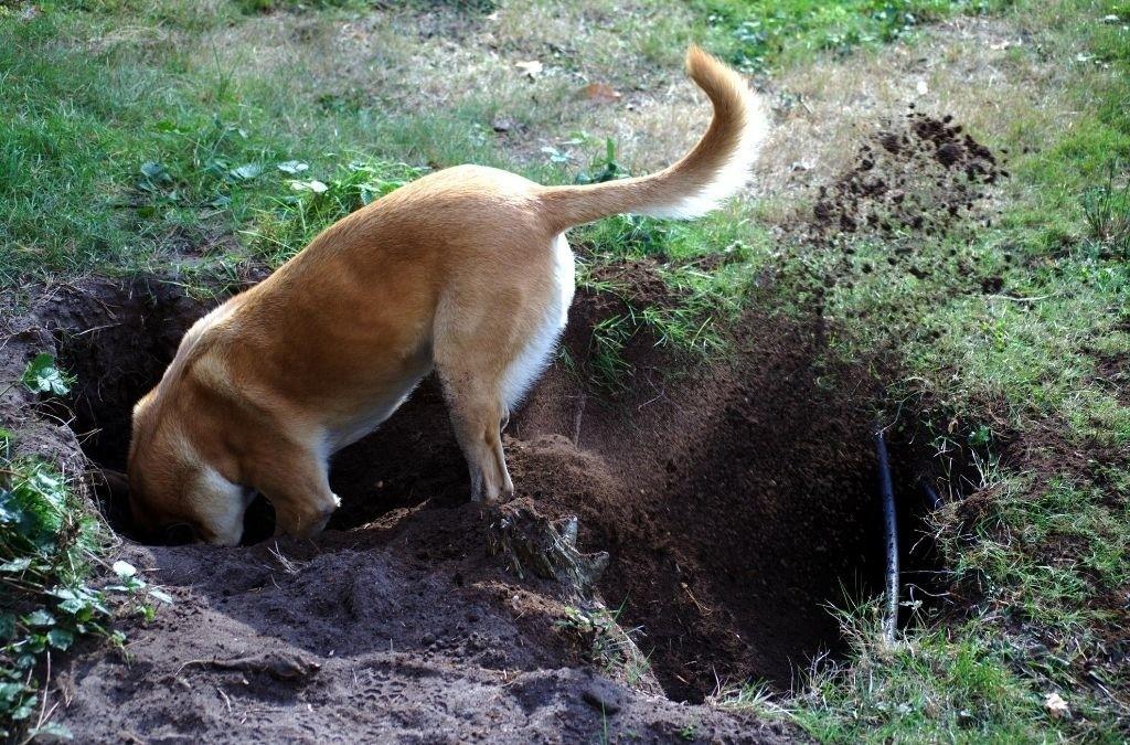 Mijn hond is aan het graven
