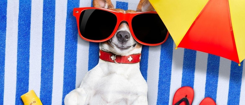 10 tips om je hond verkoeling te geven