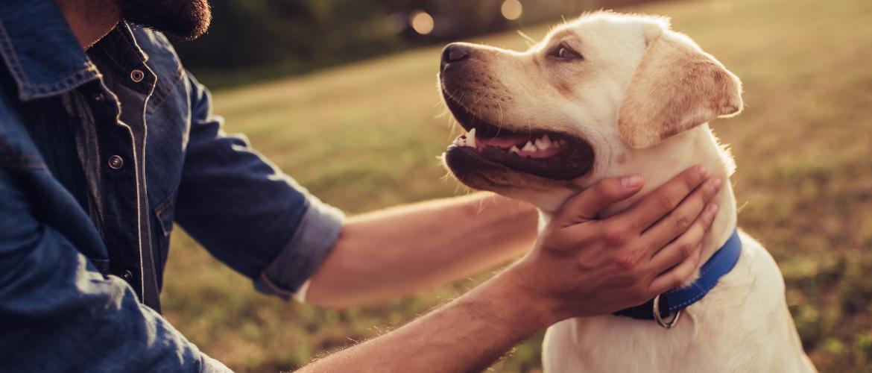 Wat is hondenpsychologie?