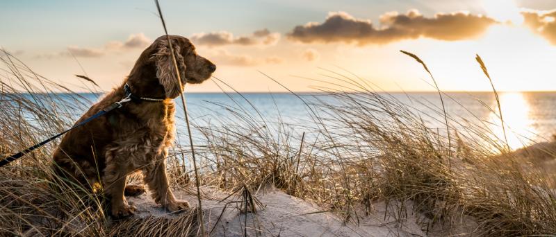 Hondenpsychologie