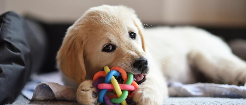 Kauwen hond belangrijk