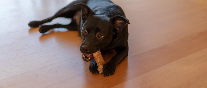 Kauwen belangrijk voor honden?
