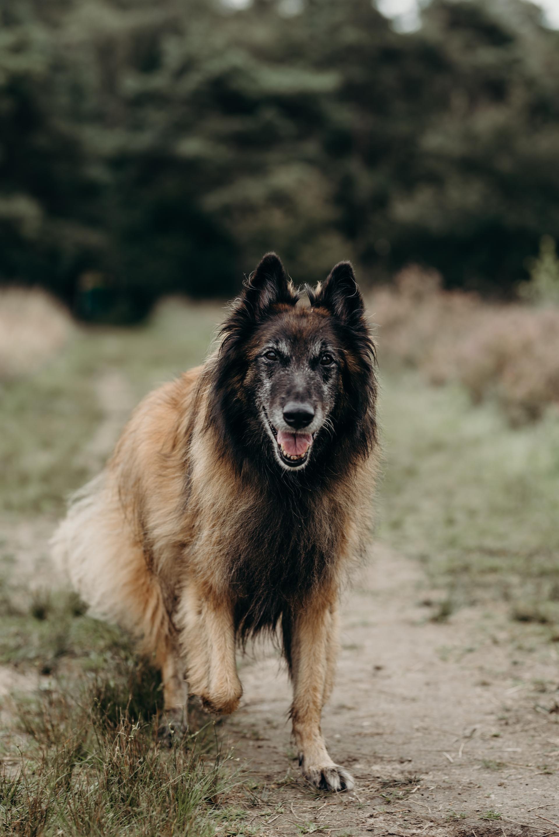 Hondecoach Aniek Wendt