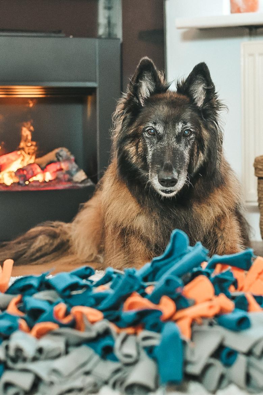 snuffelmat maken hond