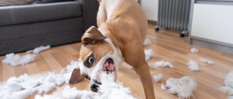 Honden en stress