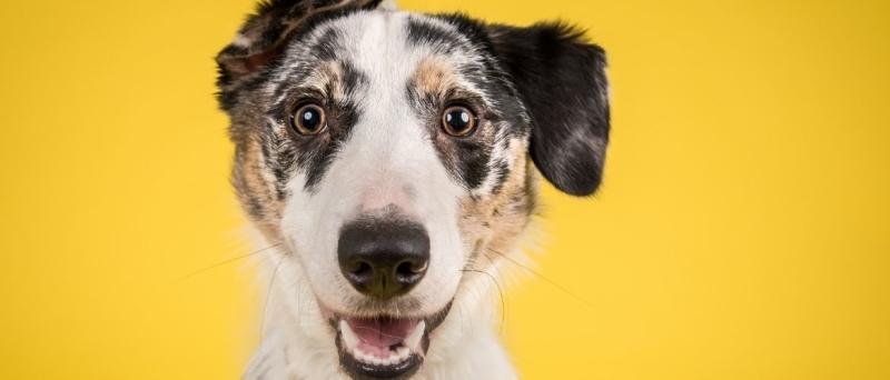 Verwijde pupillen hond