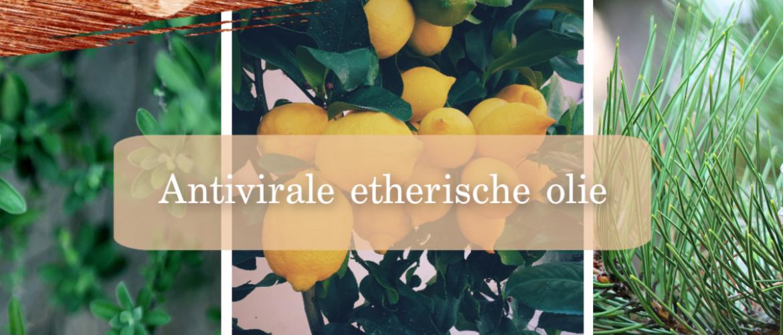 Coronavirus, 6 antivirale etherische oliën voor je weerstand