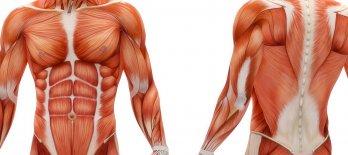 MBO Anatomie & Fysiologie