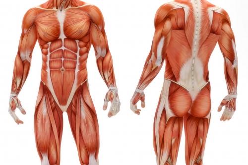 opleiding MBO anatomie & fysiologie