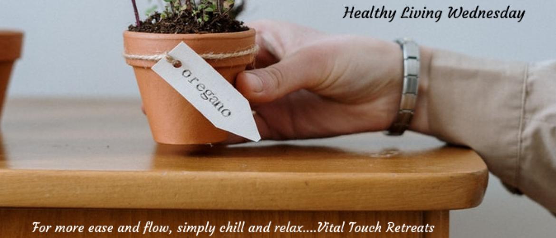 3 amazing health benefits of oregano