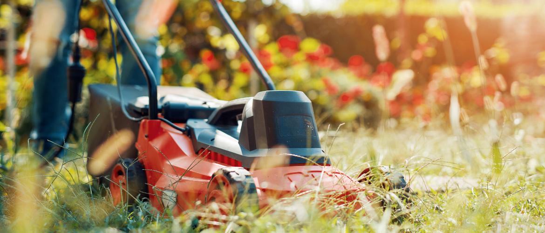 Hoe onderhoud ik mijn tuin in augustus?