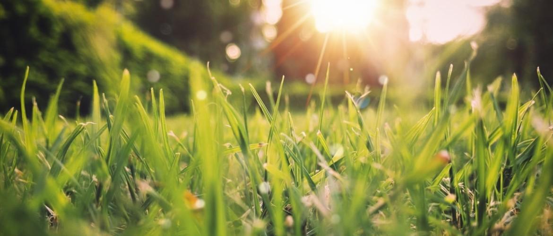 5 tips om jouw tuin voorjaar-proof te maken
