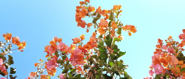Hoe houd je planten mooi tijdens warme en zonnige dagen?
