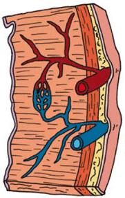 fysische vaattherapie