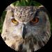 ATJ Owls