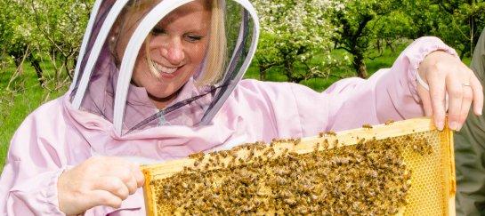 workshop kennismaken met de honingbij
