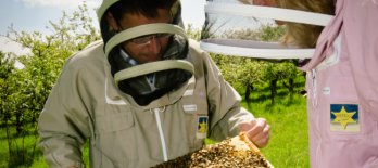 workshop starten met bijen