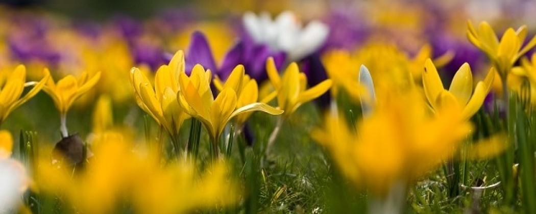 Regulier geteelde bloembollen kunnen bestrijdingsmiddelen bevatten.